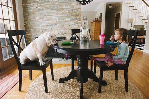 """""""Ăn no rồi, ngủ thôi!"""" và thế là Lola ngủ gục ngay trên bàn thật. (Ảnh: Rebecca Leimbach)"""