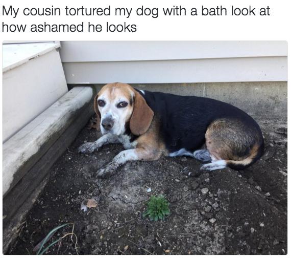 """Vì phải chịu """"nhục hình"""" cao nhất là... bị bắt đi tắm nên chú chó này có vẻ mặt vừa hận đời vừa nhục nhã cho bản thân. (Ảnh: Internet)"""