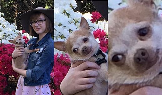 """Chỉ muốn đưa chó cưng đi chụp ảnh hoa cỏ mùa xuân xinh tươi thôi mà nó làm mặt vậy đó. Rõ ràng nó chẳng thích hoa, cũng chẳng thích mấy trò """"bánh bèo"""" này. (Ảnh: Internet)"""