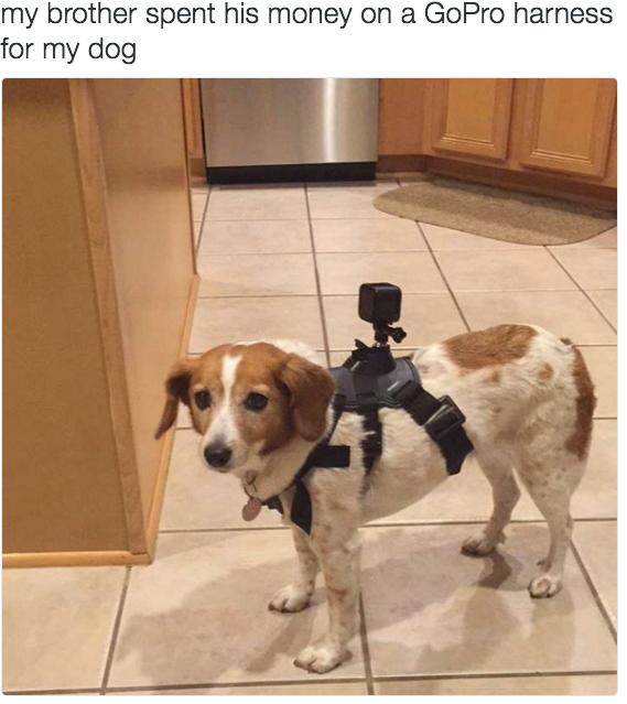 Tiêu hết tiền vào cái máy quay hành trình... cho chó và em nó cũng hoang mang không hiểu để làm gì. (Ảnh: Internet)