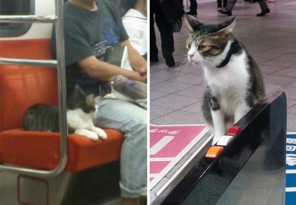 """Đi """"tàu chui"""" nhiều quá nên """"hành tung"""" mèo ta nhanh bị lộ tẩy.(Ảnh: youhei1924/fu_matu)"""