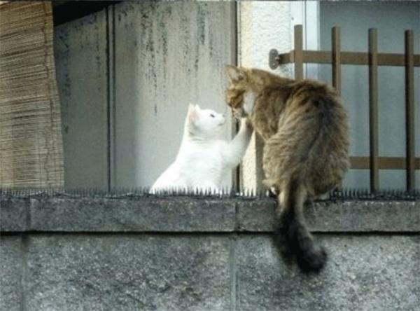 Cuối cùng cũng đã gặp được nàng mèo trắng muốt. Nỗi đau về thể xác của chú mèo cũng đã được tình yêu đền bù xứng đáng. (Ảnh: Internet)
