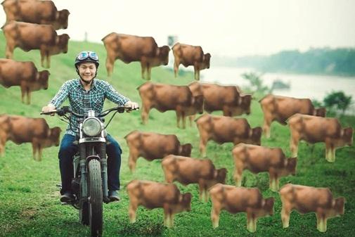 Từ một con bò, giờ thành cả đàn bò biết sinh sôi này nở.