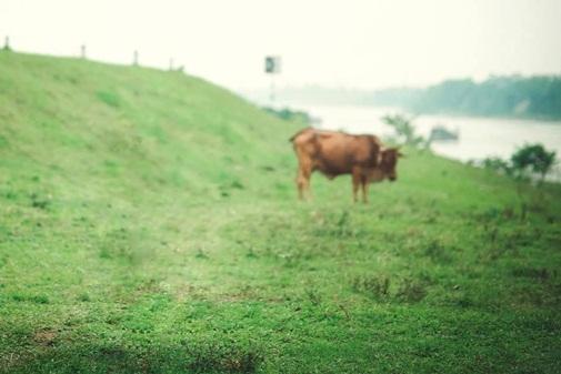 Cư dân mạng có tâm và thâm thúy nhất, xóa ngay con bò theo anh ấy yêu cầu.