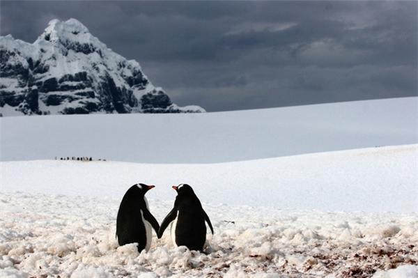 """-""""Anh sẽ dẫn em về vùng biển nắng..."""" -""""Nhưng anh ơi biển đóng băng hết rồi..."""""""
