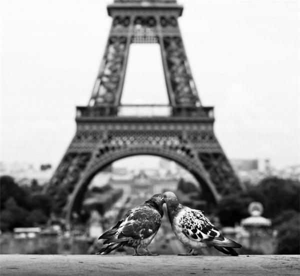 Mơ ước được đến Paris chụp một kiểu ảnh mi nhau lãng mạn dưới chân tháp Eiffel cuối cùng cũng thành sự thật.
