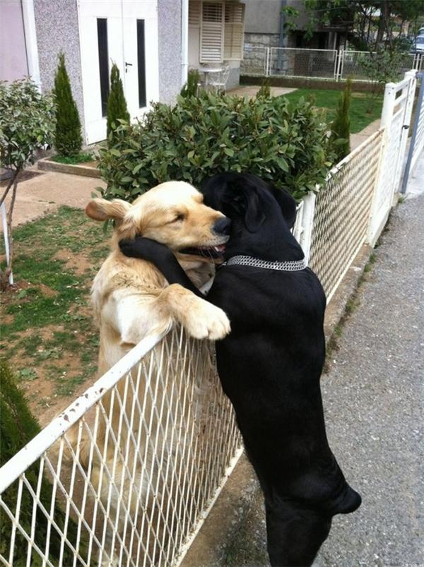 Tình yêu trở nên đẹp hơn khi có cái hàng rào làm vật cản...
