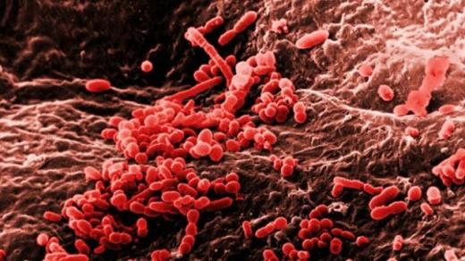 Môi trường xung quanh bạn lúc nào cũng rình rập các loại vi khuẩn.