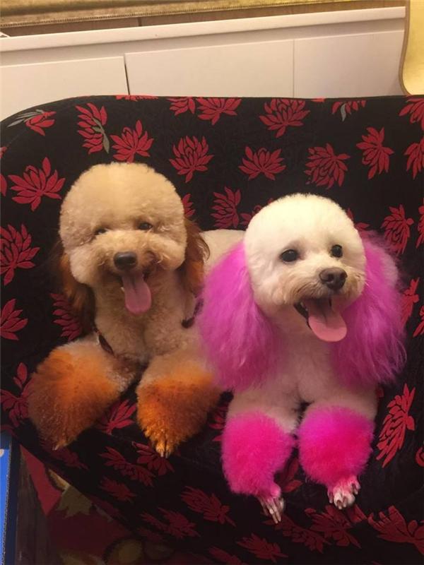 Hơn một nửa đàn chó ra đi là cú sốc rất lớn với anh Chinh. (Ảnh: NVCC)