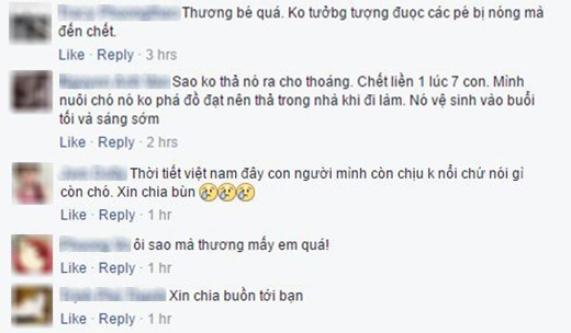 Rất nhiều lời chia buồn đã được gửi đến bạn Nguyễn Thành Chinh. (Ảnh: Nguyễn Thành Chinh)