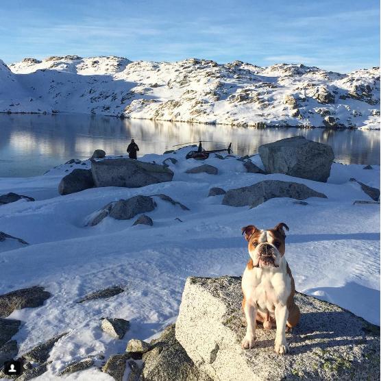Bentley đang tận hưởng cuộc sống hạnh phúc nhất mà không chỉ một chú chó mà cả một con người cũng phải mơ ước. (Ảnh: mrbentley_thedog)