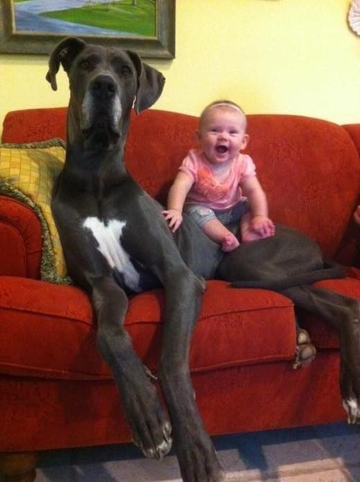 Với cô bé này thì chắc chú chó cưng không khác gì con ngựa để cưỡi. (Ảnh: imgur)