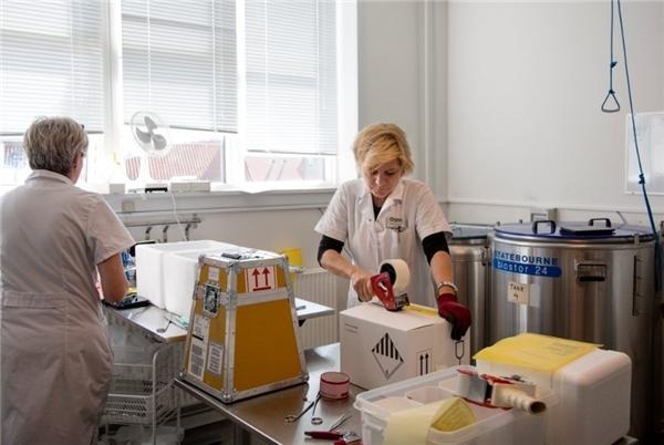 Các nhân viên đóng gói tinh trùng trước khi vận chuyển.