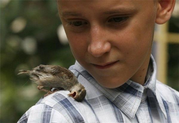 Nam sinh Nga (12 tuổi) đem chú chim sẻ bị thương trên đường phố về nhà chăm sóc. Sau khi chú chim hồi phục, cả hai trở thành đôi bạn không thể tách rời.