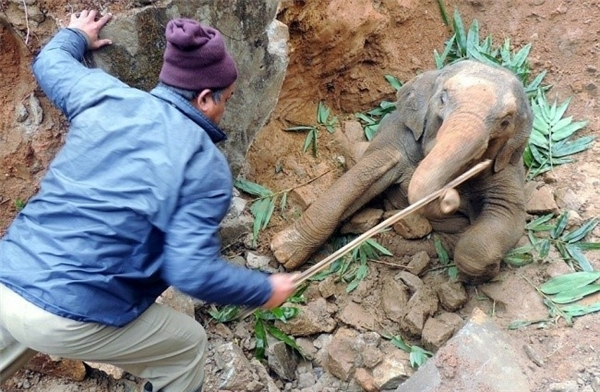 Hơn 10 hành khách đi tàu dừng lại tìm cách giải cứu chú voi con bị mắc kẹt trong khe núi ở Ấn Độ. Trong khi chờ cứu hộ tới, họ cố gắng an ủi con vật bằng cách cho nó ăn.