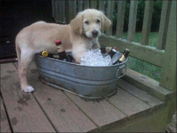 Cái xô để ướp lạnh bia mà em nó cũng không tha. (Ảnh: Internet)
