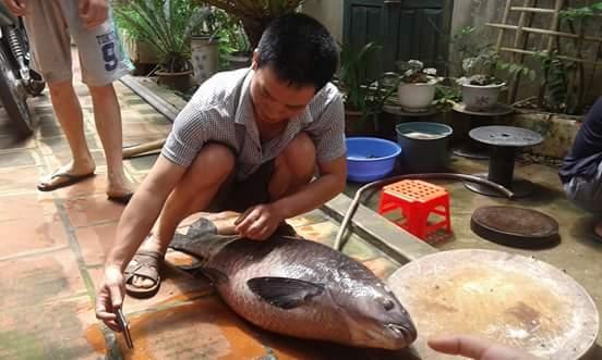 """Con cá mà bạnTuấn Thànhchia sẻ dù chỉ nặng 20kg nhưng cũng """"siêu khủng"""" rồi đúng không các bạn. (Ảnh: Internet)"""