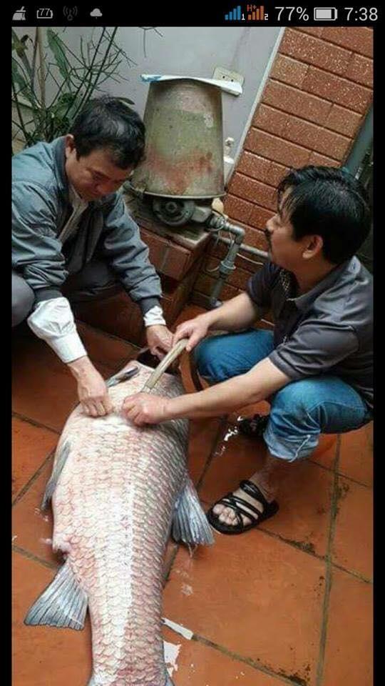 Dân mạng rần rần khoe chiến tích và kinh nghiệm săn cá siêu khủng