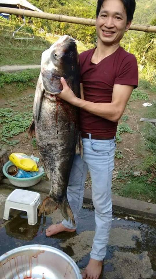 Cá mè gì mà dài gần bằng người luôn thế này ạ? (Ảnh: Internet)