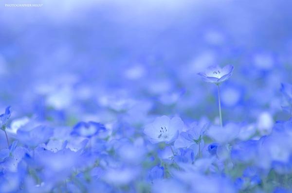 Cận cảnh loài hoa xinh đẹp.