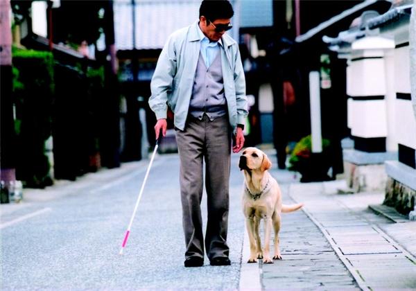 Bài học nhìn người từ câu chuyện con chó dẫn đường và người chủ mù loà