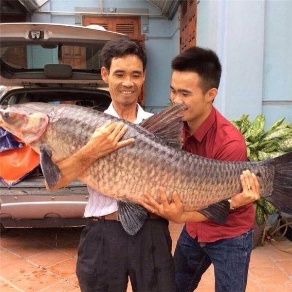 Anh Hoàng Trung - Vĩnh Phúc câu được con cá nặng tới 27kg. (Ảnh: Internet)