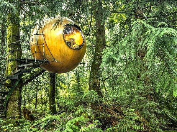 2. Ngủ ngon làm sao khi không biết có loài thú dữ nào ẩn nấp trong những bụi cây kia?