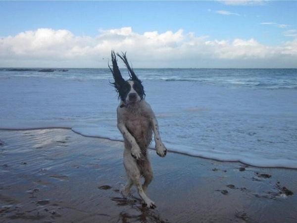 16. Vốn định làm tấm ảnh hất tóc sexy bên bờ biển, nhưng đời không như mơ.