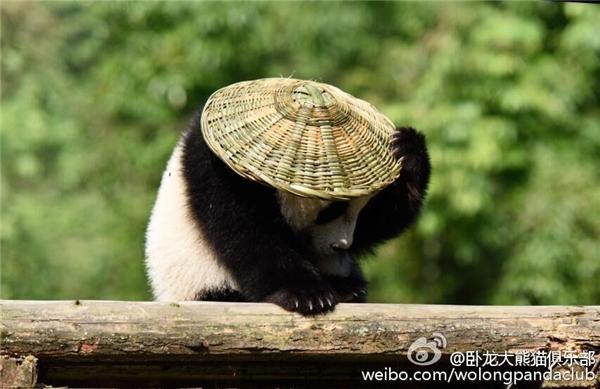Vứt giỏ tre qua một bên, và chộp lấy chiếc nón tre đội lên đầu.