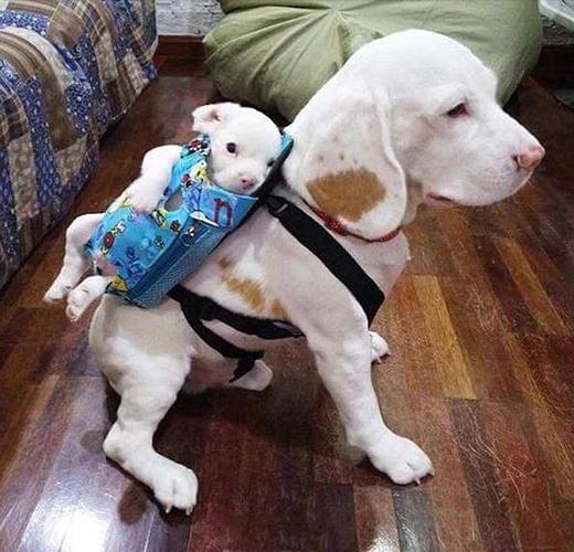 Con trai cưng hãy nằm yên, ngoan ngoãn trên lưng bố, thế giới sẽ không đụng đến con được đâu. (Ảnh: Weibo/Tinh hoa hài hước)