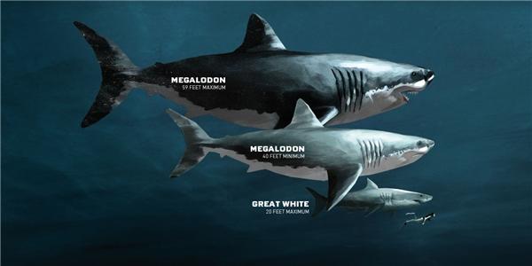 Cả 2 sẽ đối đầu với con cá mập khổnglồ thời tiền sử Megalodon