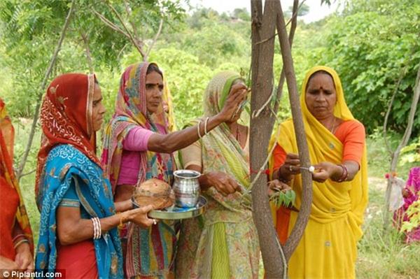 Truyền thống này được khởi xướng bởi một vị trưởng làng trước kia, vì mất con gái nên quyết định trồng cây.