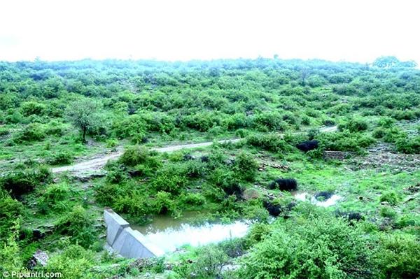 Những cây xanh kia sẽ làm nguồn lương thực cho dân làng.