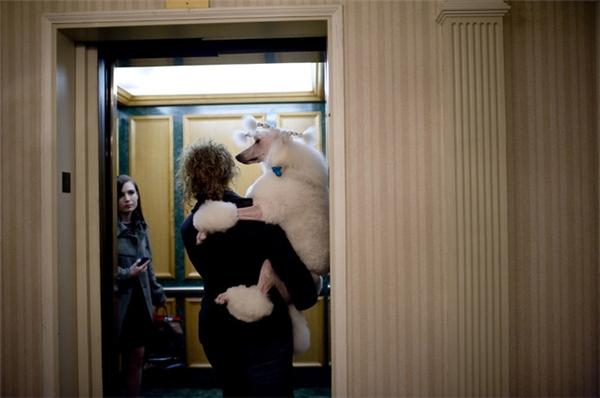 """Hãy bế """"các em chó cưng"""" lên khi đi thang máy các bạn nhé."""