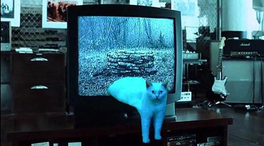 """Sau khi được """"hô biến"""",mèo cưng """"hóa thân"""" thànhmột nhân vật kinh dị bước ra từ màn hình tivi trong bộ phim đình đám """"The Ring"""". (Ảnh: Internet)"""