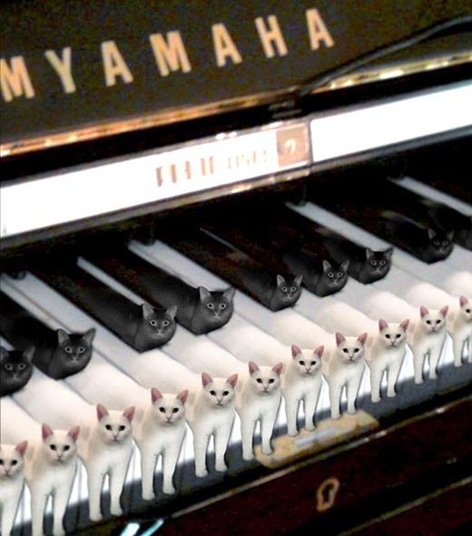 Bàn phím piano phiên bản mèo. (Ảnh: Internet)