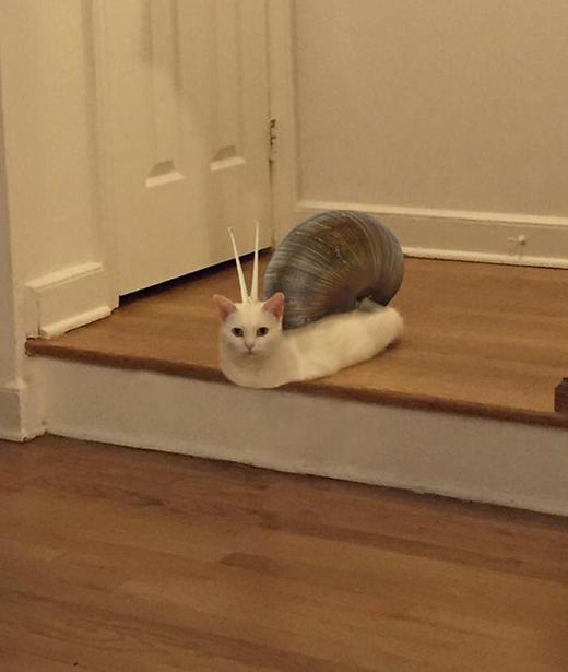 Mèo sên - Sự kết hợp hài hước giữa ốc sên và mèo. (Ảnh: Internet)