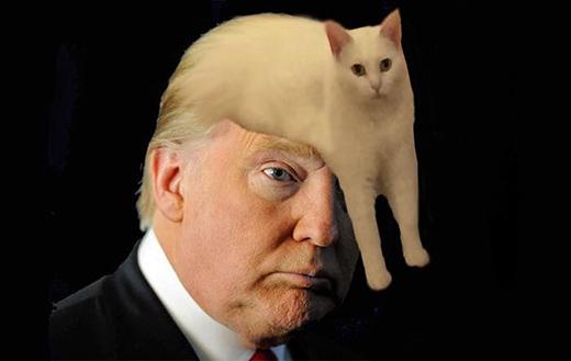 Đến Donald Trump cũng không tha! (Ảnh: Internet)