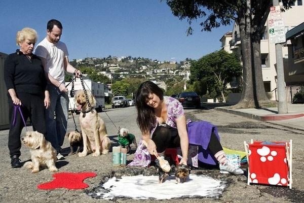 Nếu không muốn chỉ vui chơi, giải trí thì có thể tranh thủ kiếm thêm bằng cách mở dịch vụ tắm chó. (Ảnh: Internet)