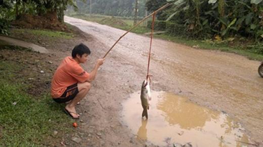 Cũng có phần hư cấu vì rõ ràng là nước không lấp đầy mình con cá kia mà. (Ảnh: Internet)