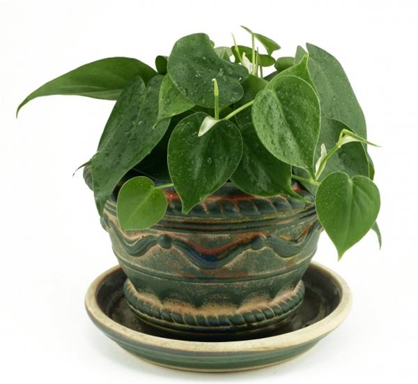 NASA công bố 15 loại cây trồng trong nhà giúp phòng đủ bệnh