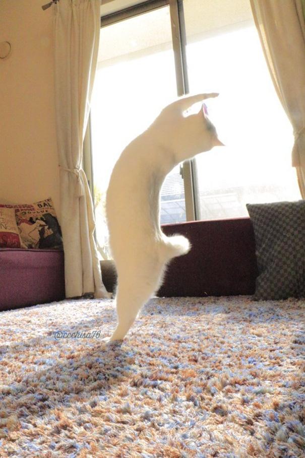 Dáng đứng chuẩn không thua một vũ công ballet chuyên nghiệp nào. (Ảnh: Internet)