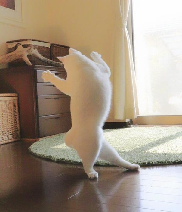 Chú mèo nhỏ say sưa nhảy múa mà không ngờ là mình đang bị chụp lén. (Ảnh: Internet)
