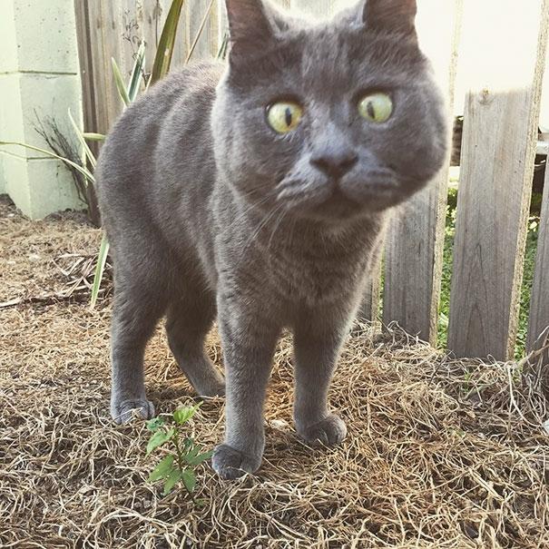 Khâm phục nghị lực sống của chú mèo mắc bệnh não úng thủy
