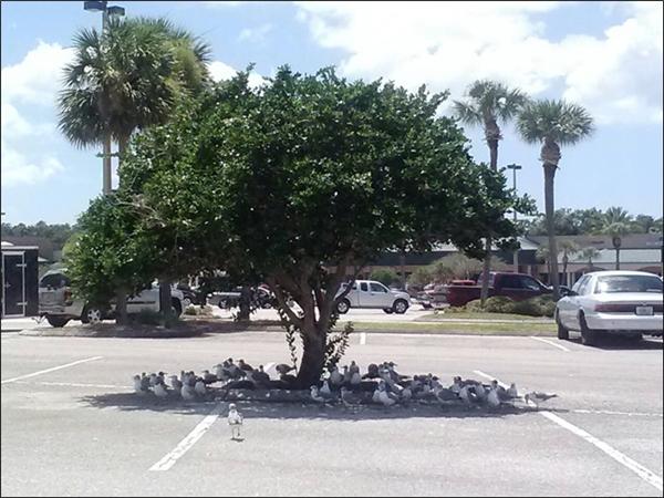 Chim cũng chọn chỗ mà đậu.(Ảnh: Internet)
