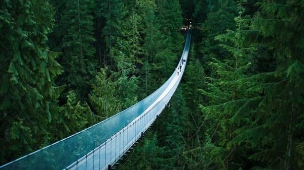 Cây cầu treo Capilano, Canada, cho phép du khách thưởng thức khung cảnh rừng sâu bao la khi thả bước trên cây cầu dài 140m này.