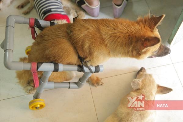 hội cứu hộ chó