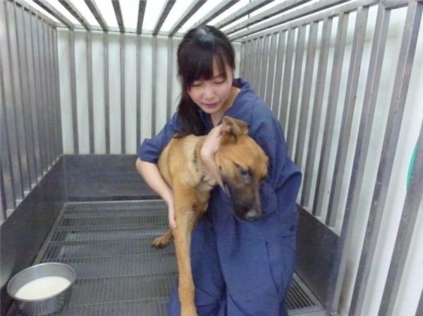 Tuy nhiên, khi làm việc ở đây, cô phải làm một công việc hết sức khủng khiếp là tiêm thuốc trợ tử cho chó.