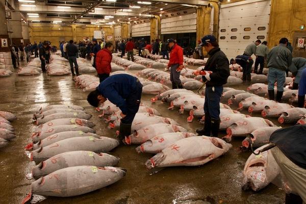 Khu chợ Tsukiji nổi tiếng.