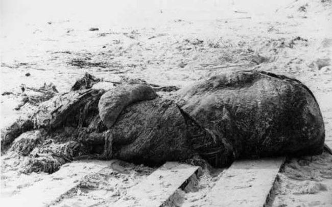 10 thủy quái lạ lùng nhất từng dạt vào bờ